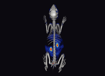 PET/CT imaging for whole body of a rabbit